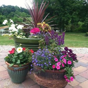 easymulch is great for potted plants