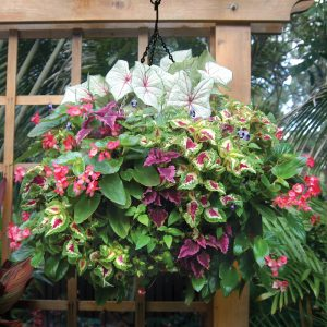 easymulch is great for hanging baskets
